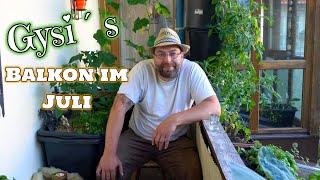 Gysi´s Balkon viel Ernte auf kleinen Raum Teil 2