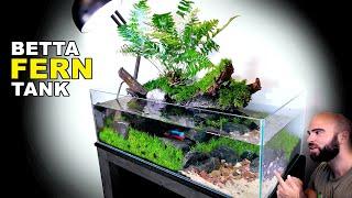 Aquascape Tutorial: Land Fern Betta Fish Aquarium (How To: Step by Step Planted Tank Guide)
