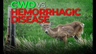 Watch Video - Hemorrhagic Disease vs. CWD