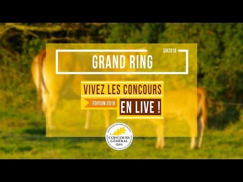 Voir la vidéo : Grand ring  du 24 Février 2018