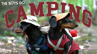 Ep 5: The Dogs Go Camping - Cute Dachshunds Camping Trip!