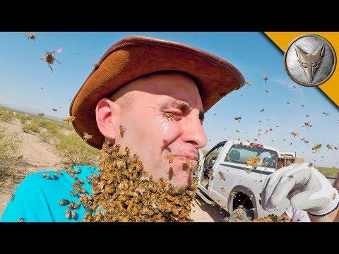 Bee Beard GONE WRONG!