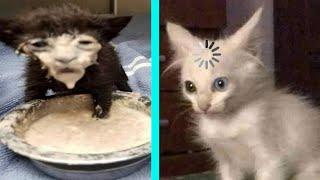 BEST DANK CAT MEMES COMPILATION OF 2020 PART 10 (from TikTok)