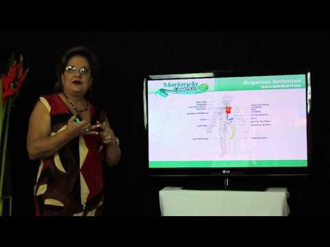 El escenario, órganos linfoides primarios y secundarios. Dra. Marianela Castés