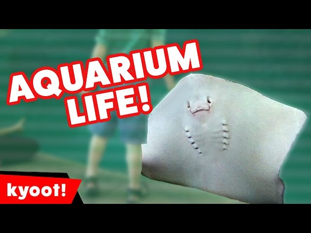 Stingray Scares Away Kid & More Funny Aquarium Videos of 2016 Weekly Compilation | Kyoot Animals