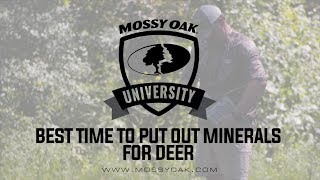 Deer Minerals | When to Establish Mineral Sites For Whitetail Deer