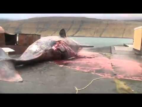 Xác cá voi bất ngờ nổ tung, chống chỉ định đang ăn cơm