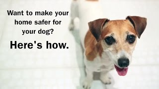 Top Tips for Dog-Proofing your Home