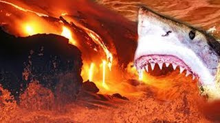 Sharks Discovered Living In A Volcano