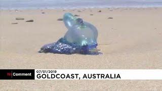 Hundreds of thousands of fish die en mass in Australia