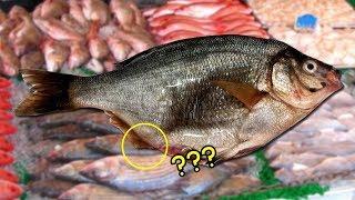 Awalnya Ikan Ini Akan Digoreng, Melihat Perutnya Buncit si Pemilik Membelahnya, Lihat yang Terjadi