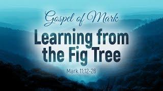Gospel of Mark: 41. Learning from the Fig Tree (Vitaliy Pelikhatyy)