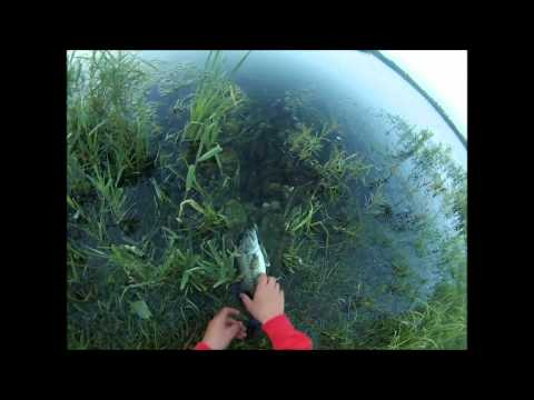 GoPro: Pond Fishing for Fat Bass