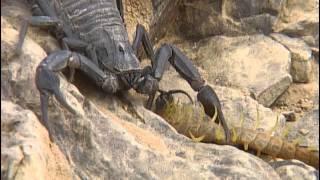 Animaux du désert : Les petites créatures du désert