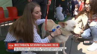 """""""Мокрі носики"""": у Луцьку вперше відбувся фестиваль безпритульних собак"""