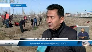 На улицах Атырау  посадили  5 тысяч саженцев