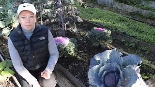 Что делать в огороде в октябре