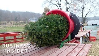 How Christmas Trees Are Grown