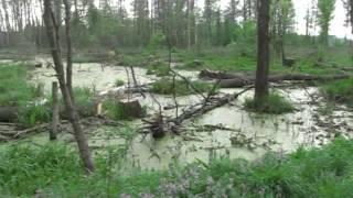 preview picture of video 'Rzeka Nurzec okolice Kolonia Pokaniewo'