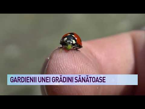 Cancer de colon drept