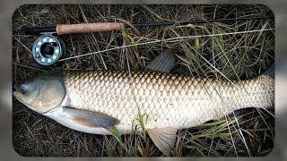 Условие успешной ловли белого амура