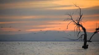 Simo Saidi - Bird's Philosophy (Official)