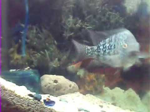 My fish tank ..hular(2)