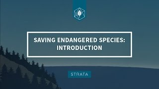 Saving Endangered Species: Introduction