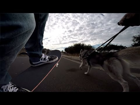 Using A Skateboard To Exercise My Siberian Husky | Yocaher Chimp Skateboard Review