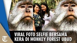 Viral Foto Selfie Bersama Monyet di Monkey Forest Ubud, Begini Triknya