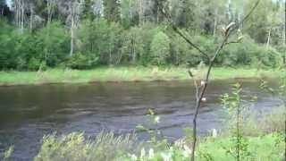 ловля рыбы на реке сясь