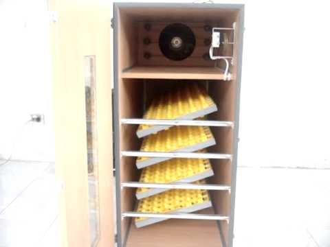 Egg Incubator Cabinet Plans DIY Chicken Poultry Hatcher Homemade Build Your Own