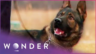 Dogs That Save Lives |  K9 Mounties S1 EP1