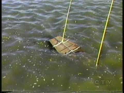 Escape Artist Dies in Failed Underwater Coffin Escape on Halloween 1983 Dean Gunnarson (видео)