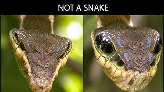 Fascinating Things Animals Actually Do