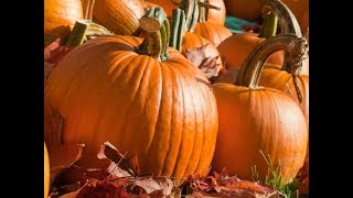 planting & growing pumpkins - common problems and tips - southern california gardening