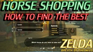 Zelda Breath of the Wild - How to Get the Best Horse