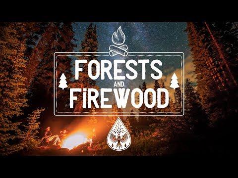 Forests & Firewood 🔥 - An Indie/Folk/Pop Campfire Playlist 🏕️