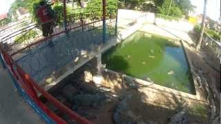 preview picture of video 'Crocodile farm, Siem Reap'