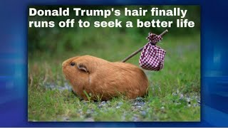 Me Me Monday: Donald Trump's Hair