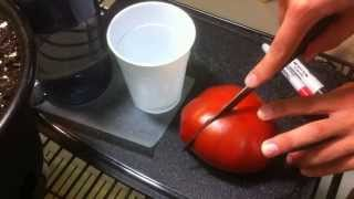How to Save YOUR Tomato Seeds! Quick and EASY Seed Saving Tomatoes!
