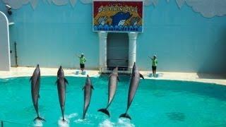 須磨海浜水族館へ行こう