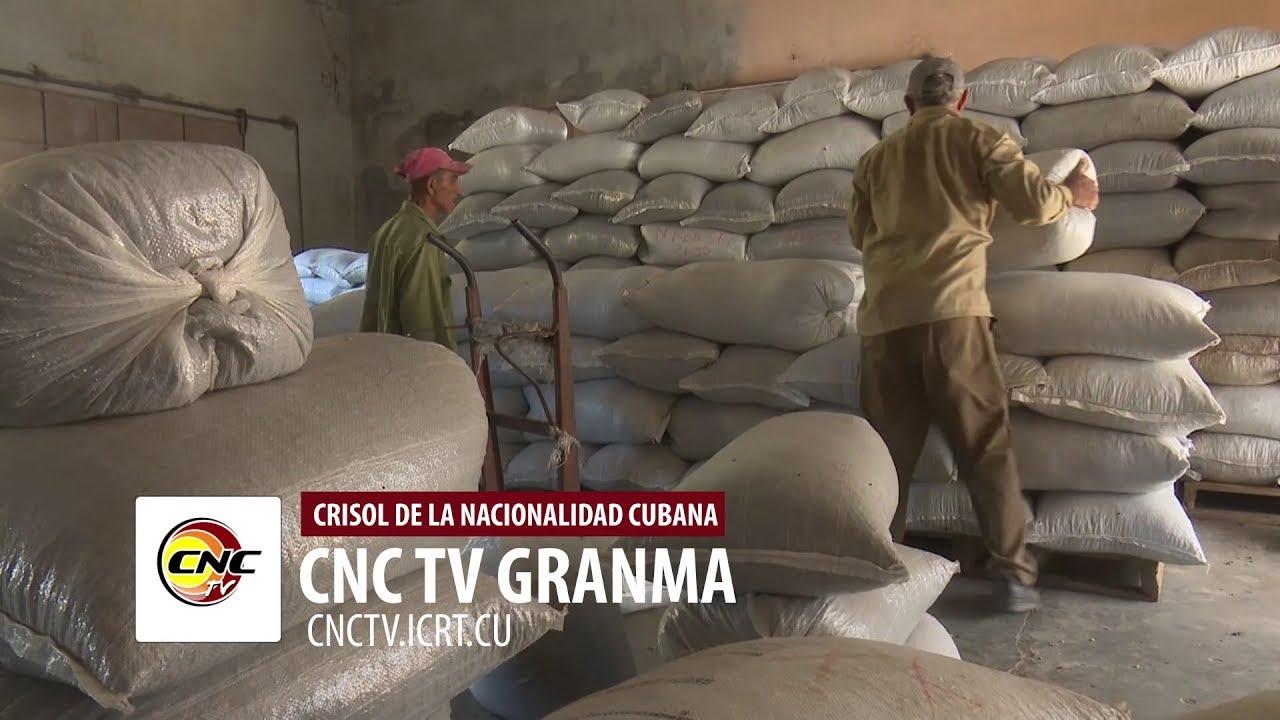 Sobresale por la entrega de café a la industria municipio del Plan Turquino de Granma