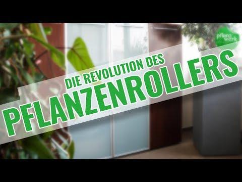 Ultraflache Pflanzenroller - Design trifft Funktionalität!