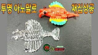 투명 아노말로등장  공룡메카드 타이니소어 모모형제의 채집기 새로나온 투명 아노말로 레진공예 오유마루