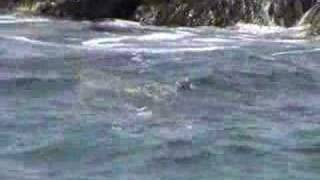 preview picture of video 'Monk Seal at Makena'