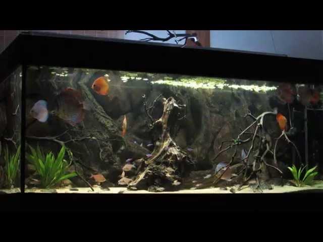 South American Community Aquarium - Discus Tank