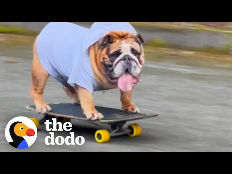 Don't You DARE Take This Dog's Skateboard Away from Him!