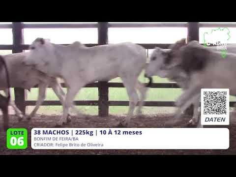 38 MACHOS - BONFIM DE FEIRA-BA
