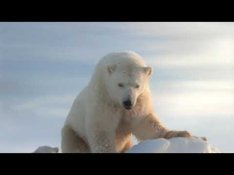 EARTH HOUR: WWF LANCIA UN VIDEO DI GABRIELE MUCCINO